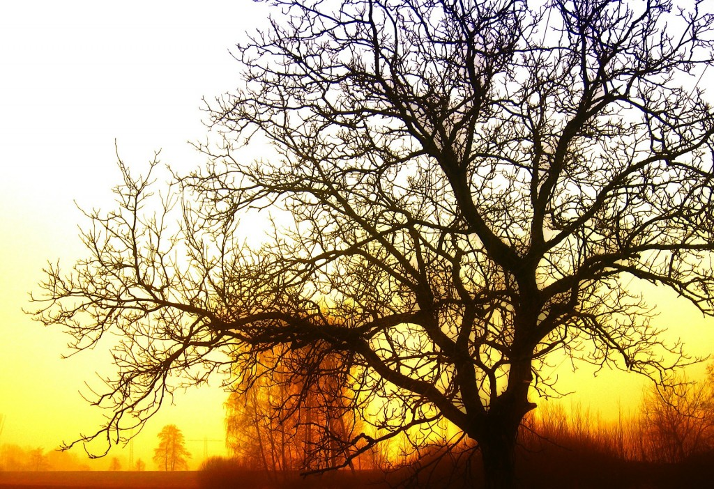 tree-77271_1920