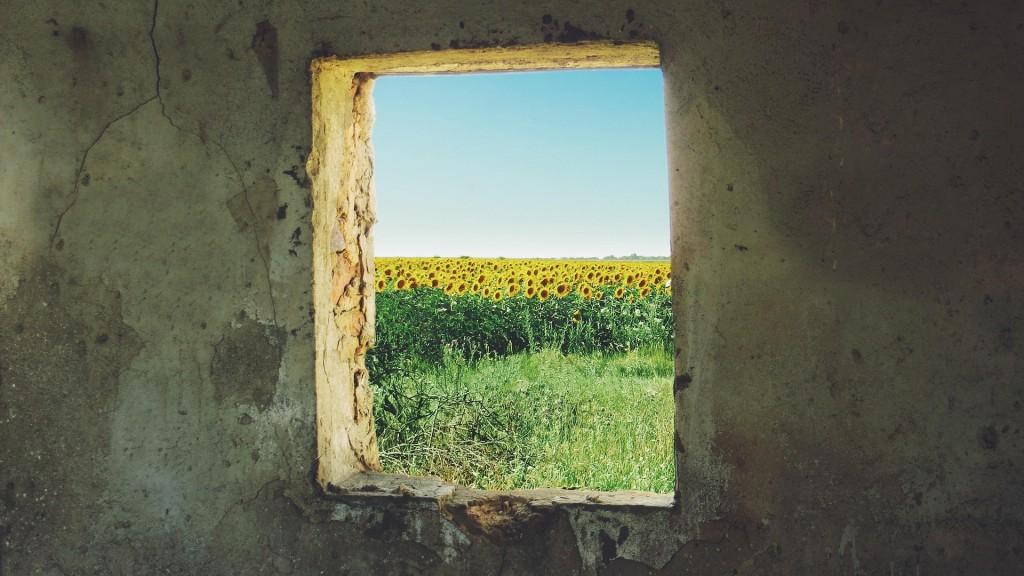 sunflower-868119_1920